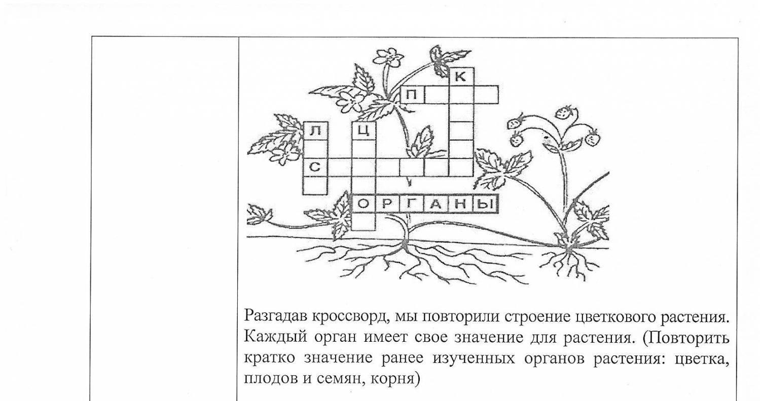 Лучшее сообщение по теме строение стебля